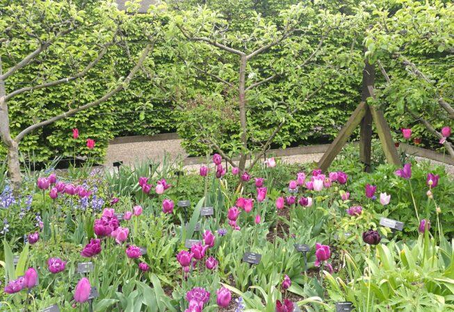 Yvoire, Il giardino dei cinque sensi