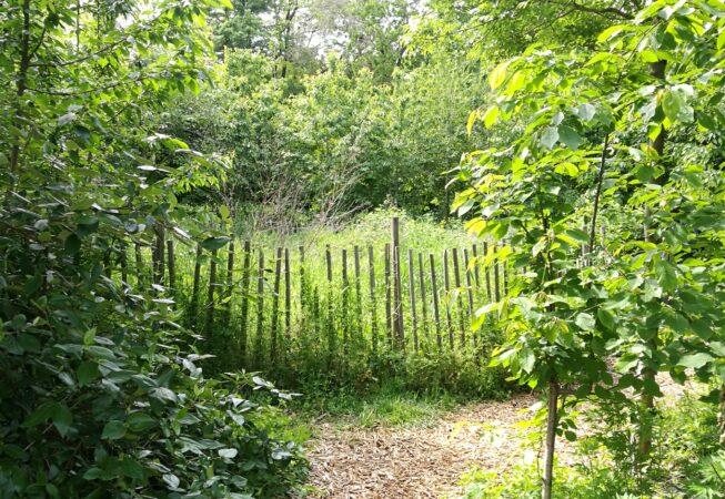 Parc Clos Layat, il boschetto con area ecologica