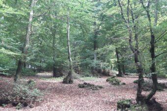 IL BOSCO DI TUTTI. La comunità alla salvaguardia dei boschi
